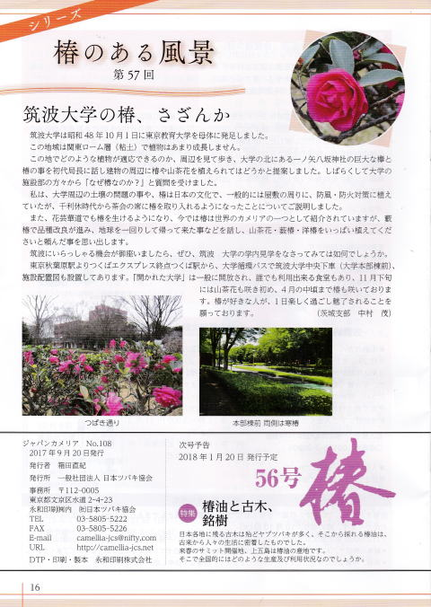 japancamellia108