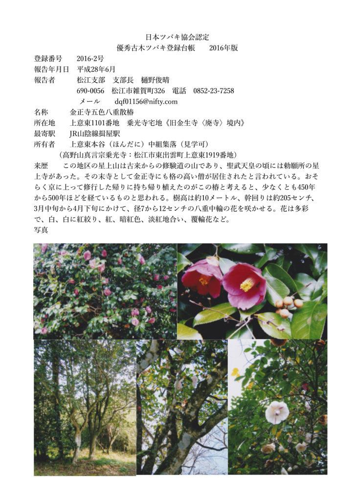 2016-2号 金正寺五色八重散椿