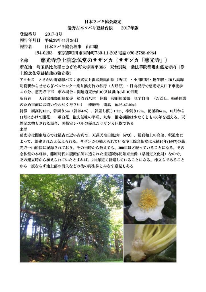 2017-3 慈光寺サザンカ