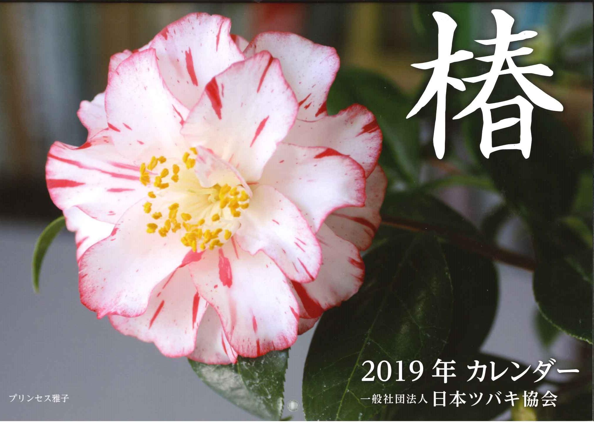 2019椿のカレンダー表紙