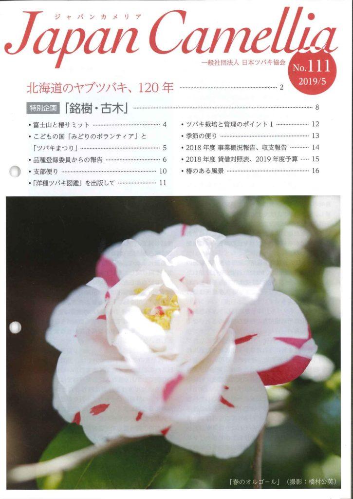 Japancamellia111表紙