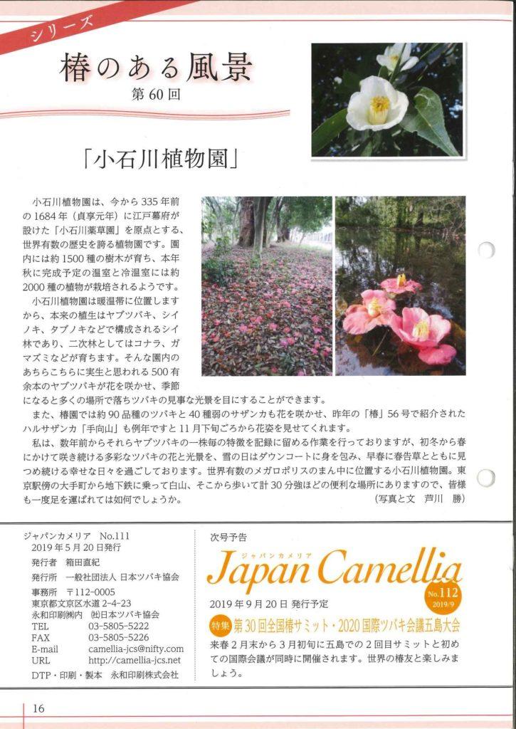 Japancamellia111裏表紙