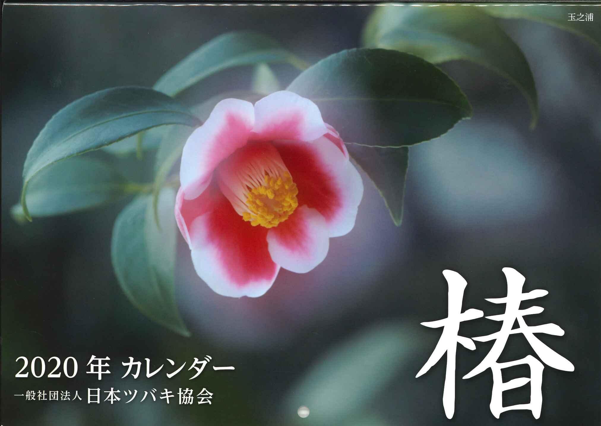 日本ツバキ協会トップバナー