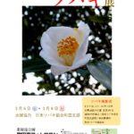 20200306春町田支部ツバキ展