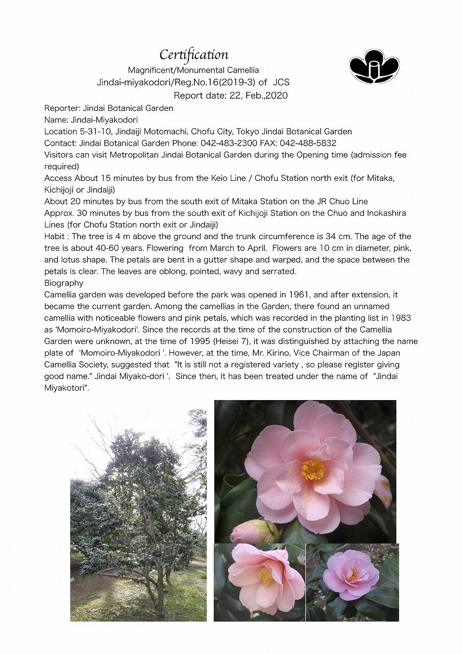 No.16 M_M Camellia,JC