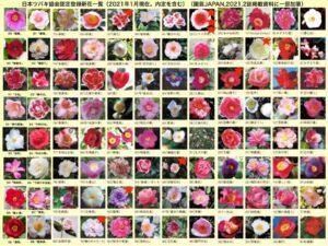 日本ツバキ協会認定登録新花写真